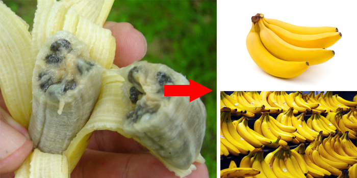 bananas-before-and-now